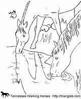 Coloring Tennessee Horse Walking Horses Schleich Triangle Malvorlagen Pferde Adult sketch template