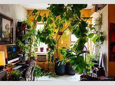 My 1200sqft Inside Summer Rayne Oakes' Williamsburg Oasis
