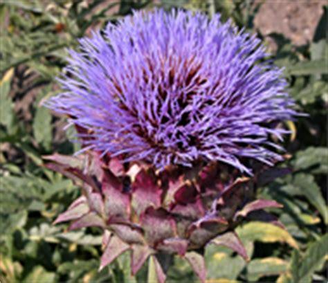 Botanischer Garten Berlin Arzneipflanzen by Sommer Im Botanischen Garten Berlin