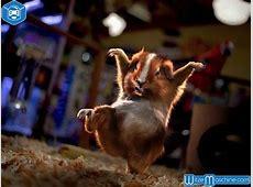 Chinesische Maus Kung Fu Hamster Tierwitze, Lustige