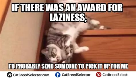 Lazy Cat Meme Lazy Cat Memes Cat Breed Selector