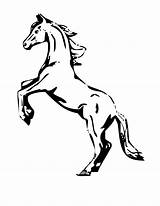 Horse Coloring Pages Rearing sketch template