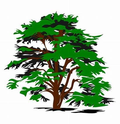 Nature Clipart Clip Clipartpanda Downloads Tree Simple