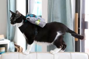 backpack for cats your cat wants a backpack the sewing