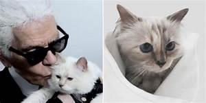 Choupette Chat Karl : choupette la vie luxueuse du chat de karl lagerfeld ~ Medecine-chirurgie-esthetiques.com Avis de Voitures