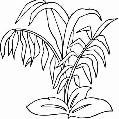 Coloring Plants Pages Rainforest Sea Drawing Jungle
