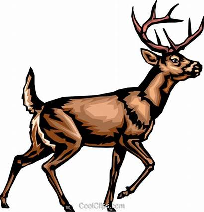 Deer Tail Clipart Whitetail Clip Library Svg