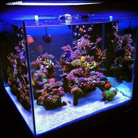 Cube Aquarium Aquascape by Top Ten Aquariums Of All Time Nominate Now Page 13