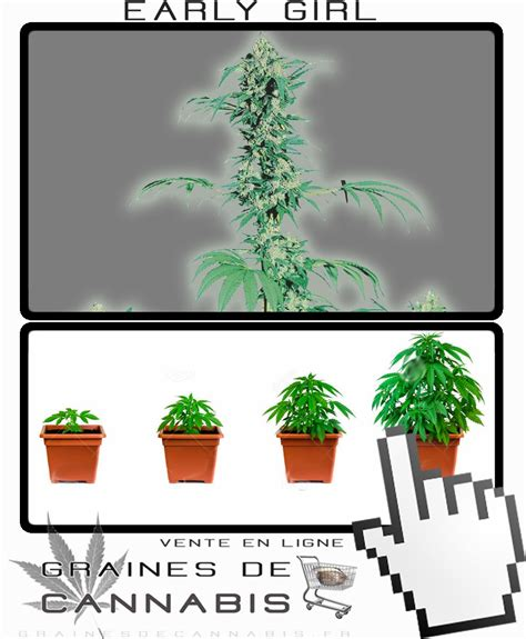comment commencer a planter du cannabis