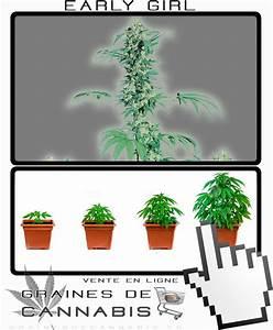 Comment Faire Germer Une Graine : graines de cannabis pour le nord de la france ~ Melissatoandfro.com Idées de Décoration