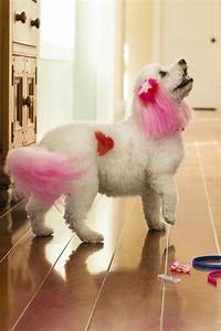 petsmart introduces creative grooming options to express With petsmart dog grooming hours