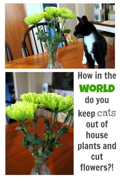 how to keep cats out of house plants and cut flowers the creek line house