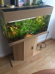 Komplett Aquarium Kaufen : mp eheim aquarium 112l komplett set in iserlohn fische aquaristik kaufen und verkaufen ber ~ Eleganceandgraceweddings.com Haus und Dekorationen