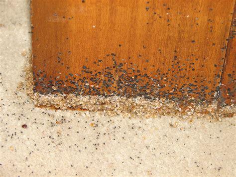 pest control rat poison mousetrap uk cast