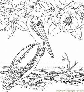 Coloring Pages Statelabirdflower (Birds > Pelican ) - free ...