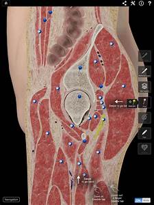 Hip Pro Iii Another Impressive Specialist Nova Anatomy App