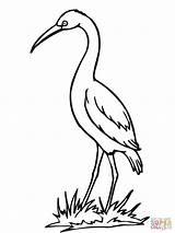 Coloring Cegonha Colorir Desenho Crane Stork Desenhos Parada Imprimir Pintar Pintarcolorir Bird Moziru Tudodesenhos Getdrawings sketch template