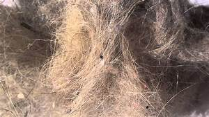 House Dust Allergens & Indoor Air Quality - YouTube