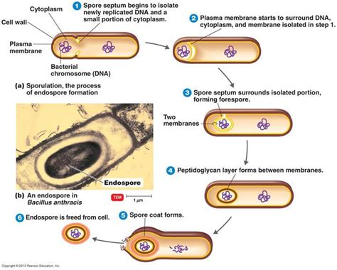 test 1 microbiology with baldwin at mizzou university studyblue