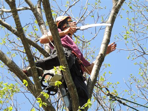 properly prune  trees tree trimming