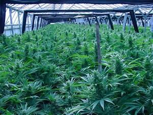 medical marijuana states florida