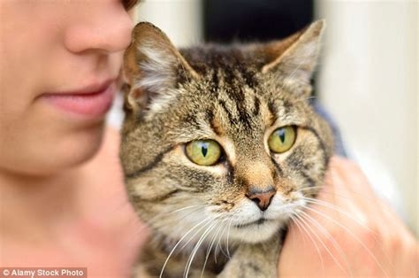 cat dating site owners are most faithful in relationships but those