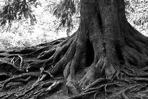Jonathan Sloman - Tree roots