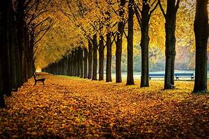 Nature, Bench, Fall, Wallpapers, Hd, Desktop, And, Mobile, Backgrounds