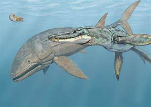 Leedsichthys problematicus: The Largest Bony Fish ...