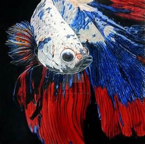 Betta Fish in Colored Pencils by Laffeetaffee on DeviantArt