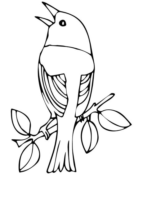 coloring pages warbler printable  kids adults