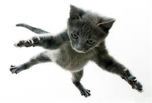 flying cats this and that aroundustyroads