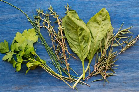 garlic  soul earth day planting herbs