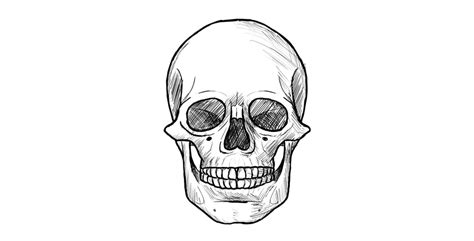 How Draw Skull