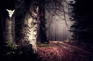 Nature, Landscape, Trees, Forest, Leaves, Mist, Fall, Path, Plants, Skull, Horns, Wallpapers, Hd