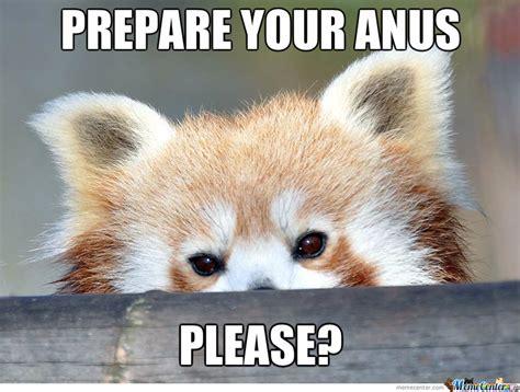 Red Panda Meme - polite red panda by likeaboss meme center