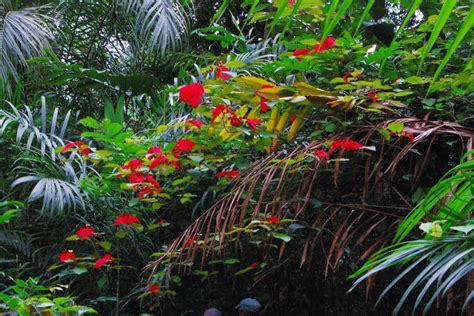 treknature lambarene jungle flower photo