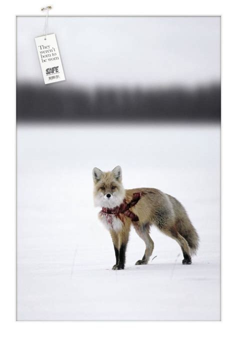 animal rights group campaigns images  pinterest