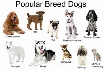 Dogs Breeds Different Together Isolated Royalty Similar