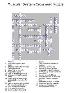 Muscular System Crossword Puzzle
