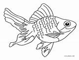 Fish Coloring Pages Line Saltwater Realistic Drawing Goldfish Printable Cool2bkids Colorful Getcolorings Getdrawings Salt Vector Aquarium sketch template