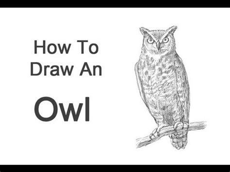 draw  owl great horned youtube