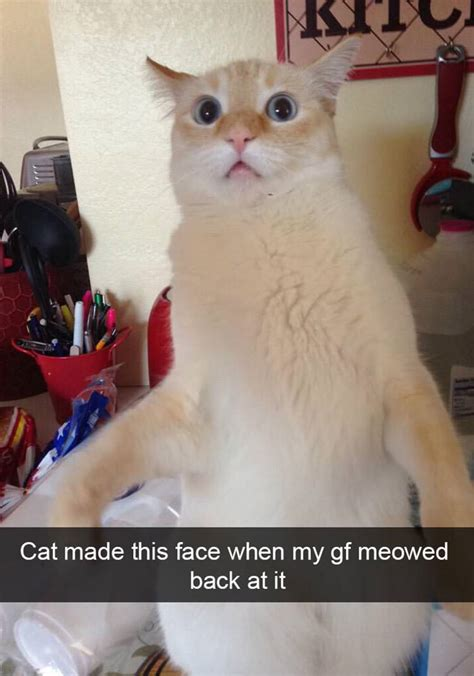 15 Of The Funniest Cat Snapchats Top13