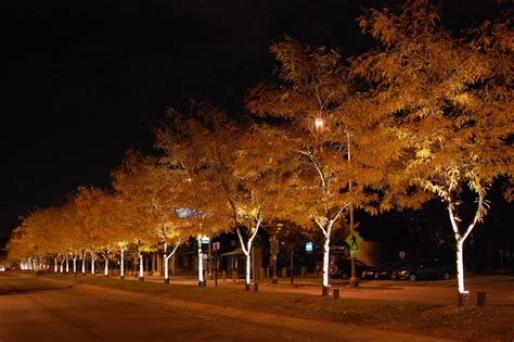 idea  washington avenue  trees   uplighted