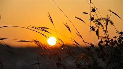 Summer Sunset 4k Desktop Wallpapers Grass Ultra