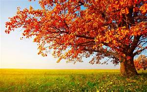 Tree, Hd, Wallpaper