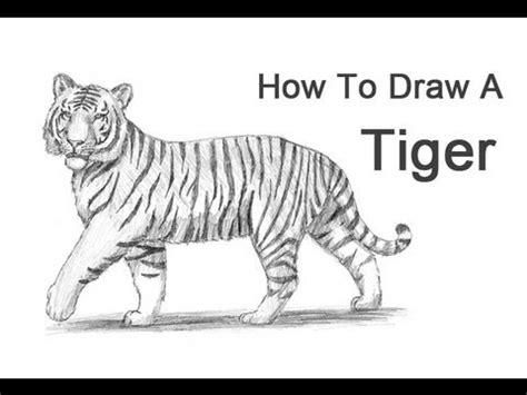 draw  tiger youtube