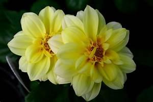 flowers for flower lovers.: Beautiful flowers wallpapers.