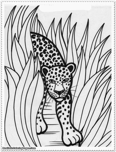 realistic animal coloring pages realistic jungle animal coloring pages realistic