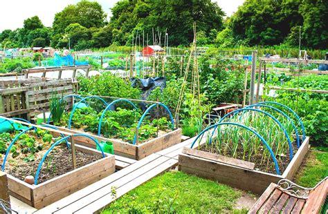 best backyard gardens best tips to create diy vegetable garden with wooden fences goodhomez com